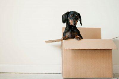 umziehen mit haustier tipps zur stressvermeidung f r hunde und katzen. Black Bedroom Furniture Sets. Home Design Ideas
