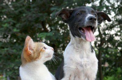 Umziehen mit Haustier