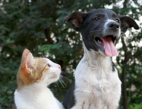Umziehen mit Haustier: Stressvermeidung für Hund und Katze