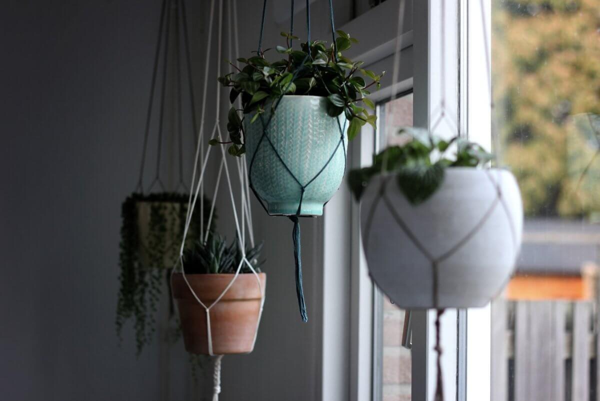 Pflanzen Deko