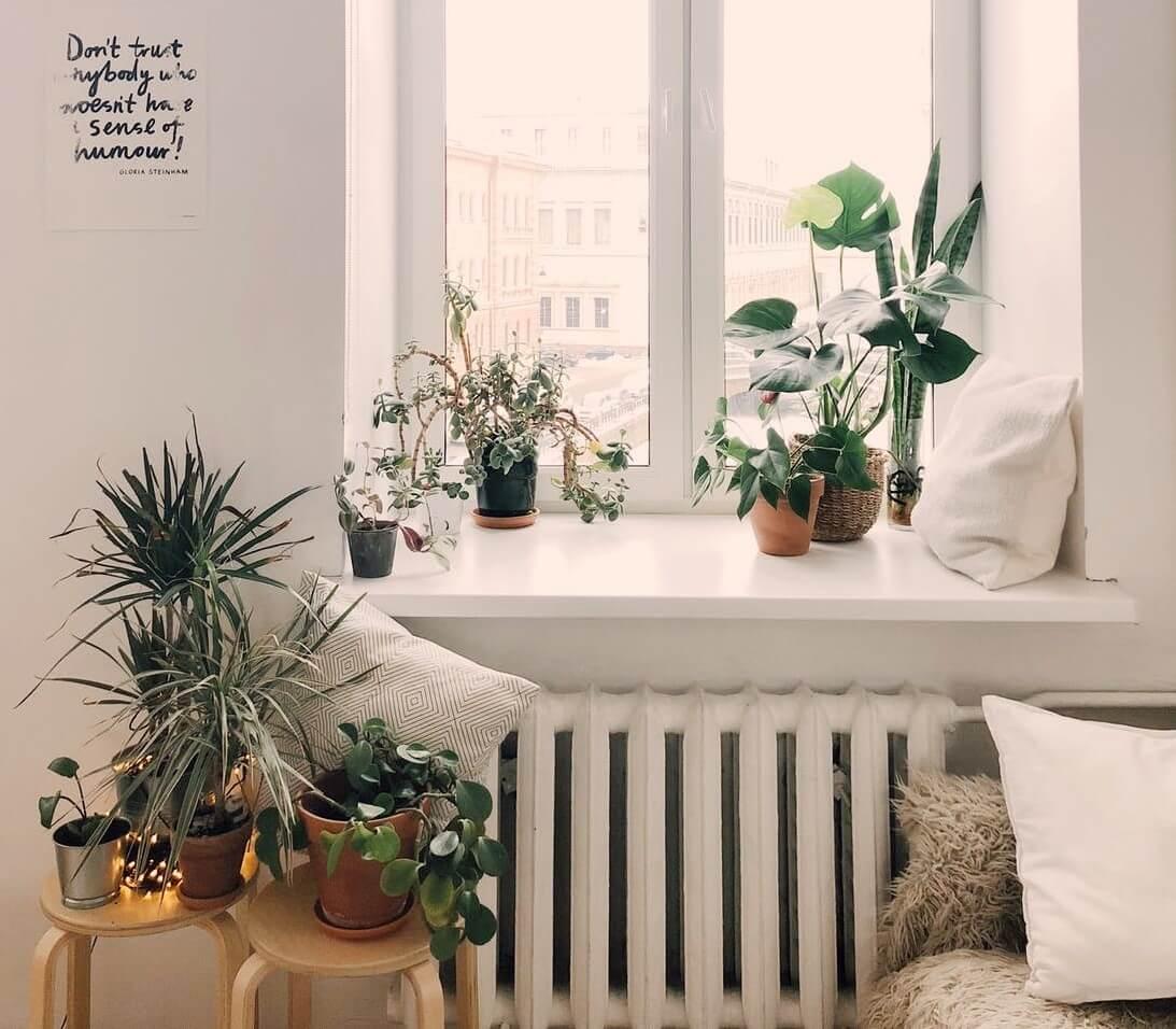Pflanzen Tipps