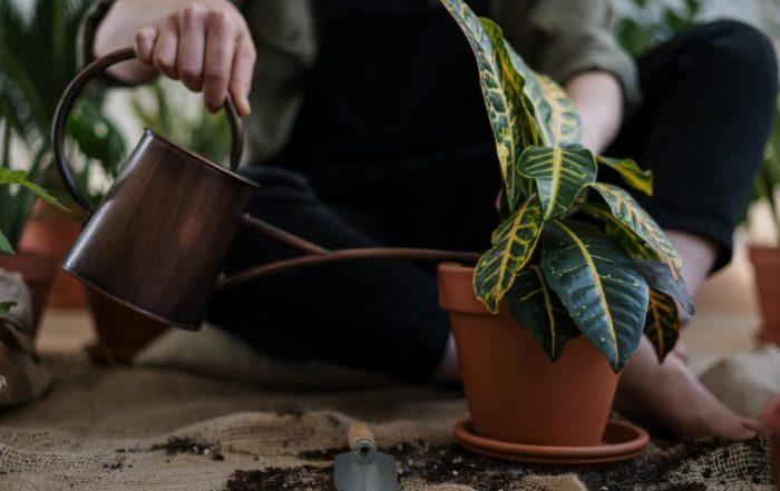 Pfegeleichte Zimmerpflanzen